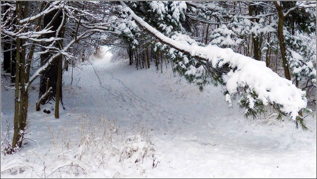 3d Winter Wallpaper Free Winter Snow Path Winter Snow Path This Is A Hiking Path