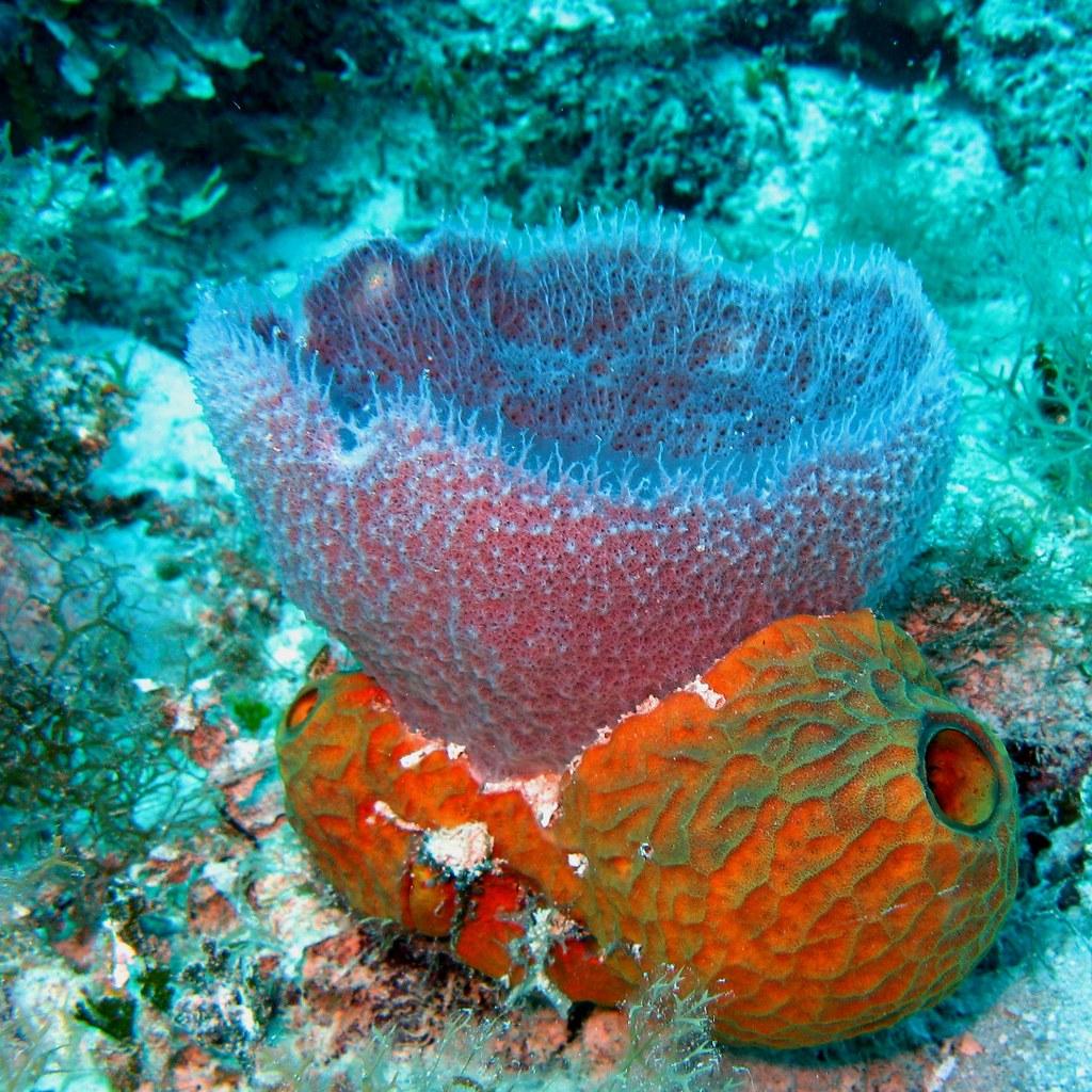 Tropical Ocean 3d Live Wallpaper Pretty Porifera Colorful Sponges On A Tropical Reef
