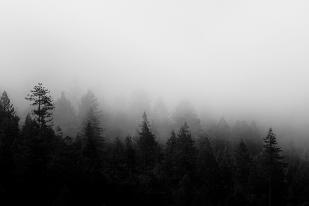 Black And Gray Wallpaper Foggy Trees Humbolt County This Was A Shot I Took From