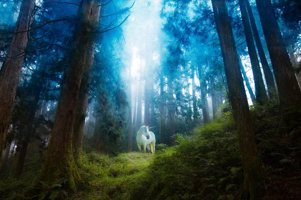 Fall Woodland Creatures Wallpaper 深林 Ren Image Flickr
