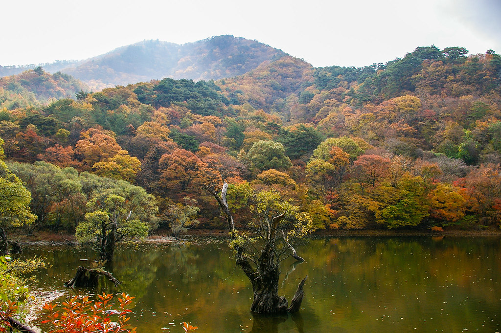 Fall Scenery Wallpaper 주산지 Jusanji Pond Cheongsong South Korea 주산지 Jusanji