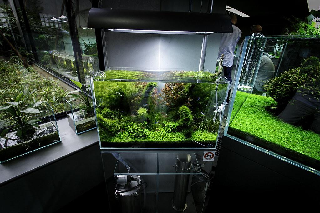 Fish Tank 3d Wallpaper Ada Nature Aquarium Gallery Beautiful Moments Of The