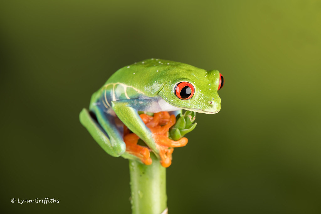 3d Colourful Wallpaper Red Eye Tree Frog Where Next D75 2758 Jpg As Its Name