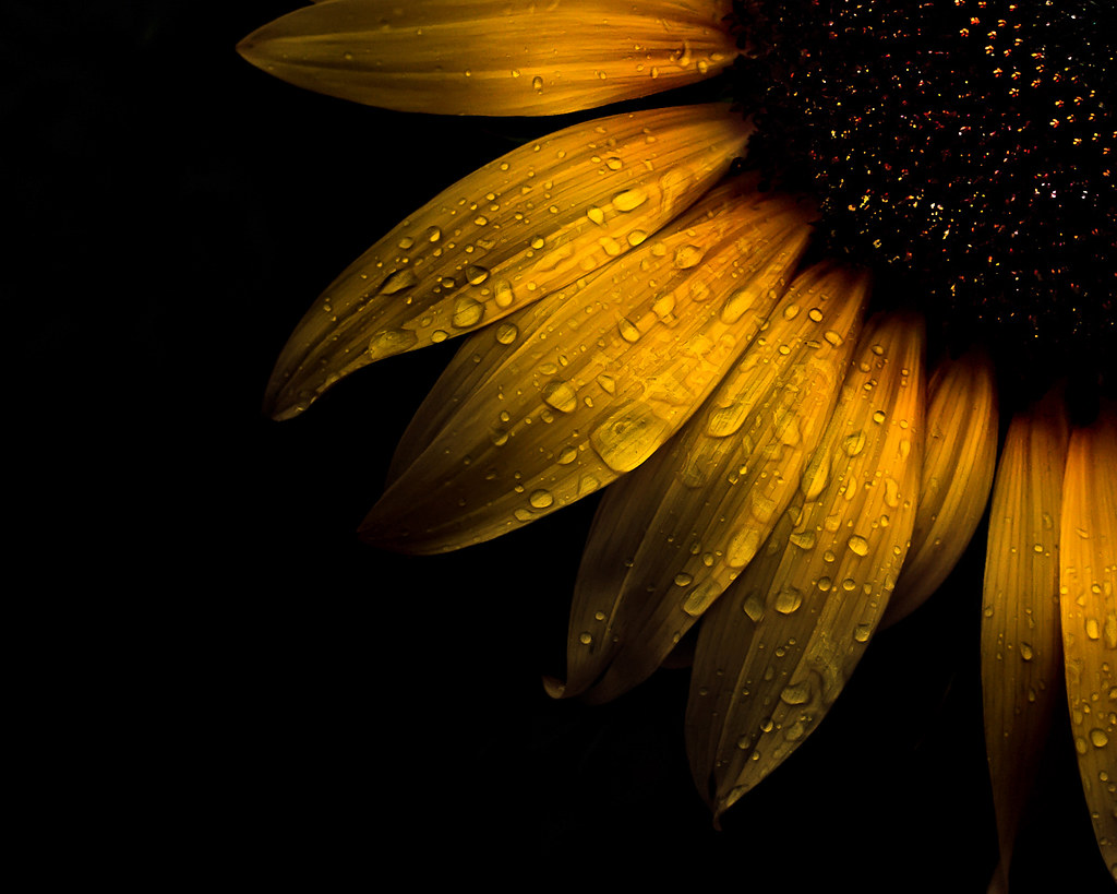 3d Wallpaper Ship Backyard Flowers 28 Sunflower A Series Of Photographs Of