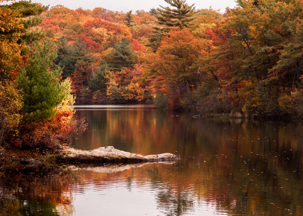 Beautiful Fall Scenery Wallpaper Peak Fall Color On Birch Pond Credit Jeff Folger Flickr