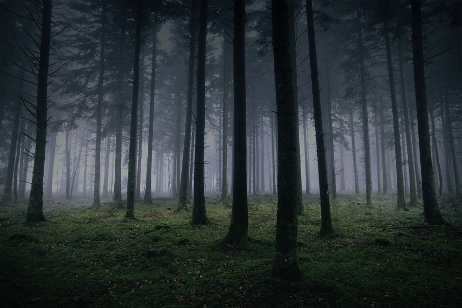 Free Fall Forest Wallpaper Dark Forest Around Me Gaylord Boussaud Flickr