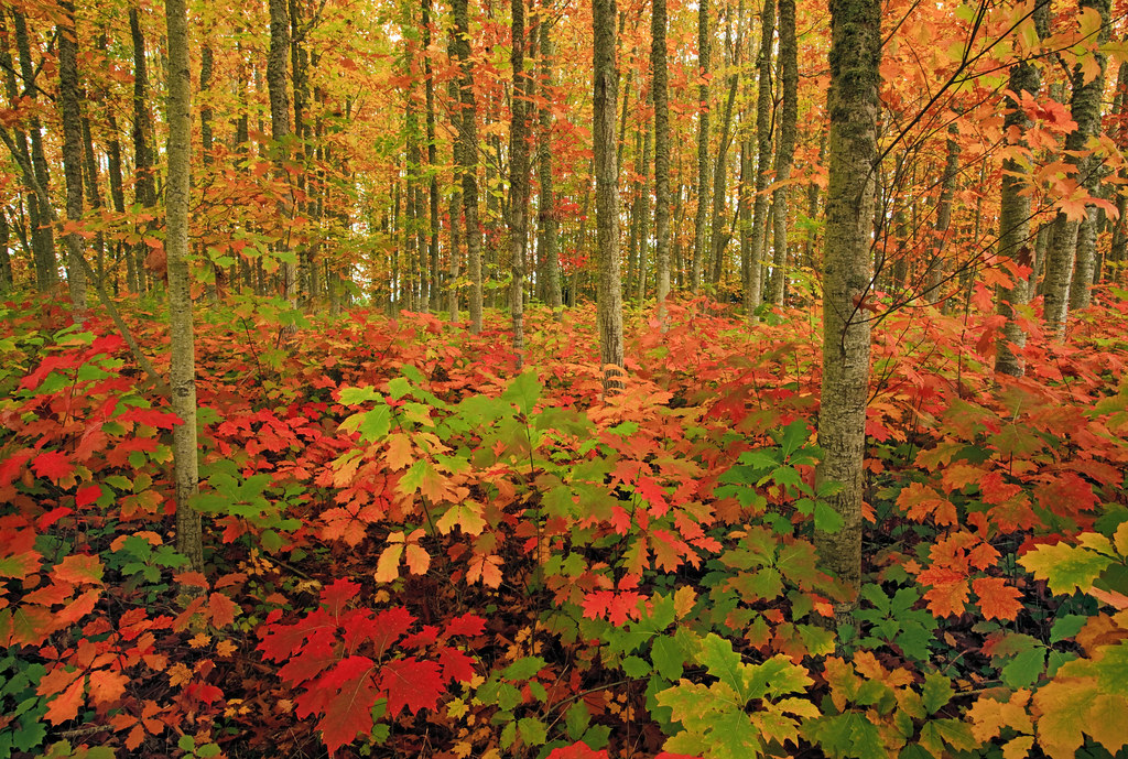 Fall Autumn Wallpaper Free Autumn Forest The Season Ignites An Explosion Of Vivid