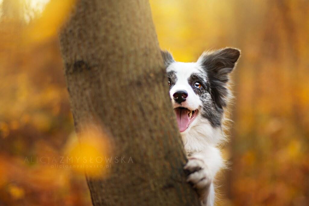 Fall Leaves Wallpaper Border Alicja Zmyslowska Dog Photography Alicja Zmysłowska Flickr