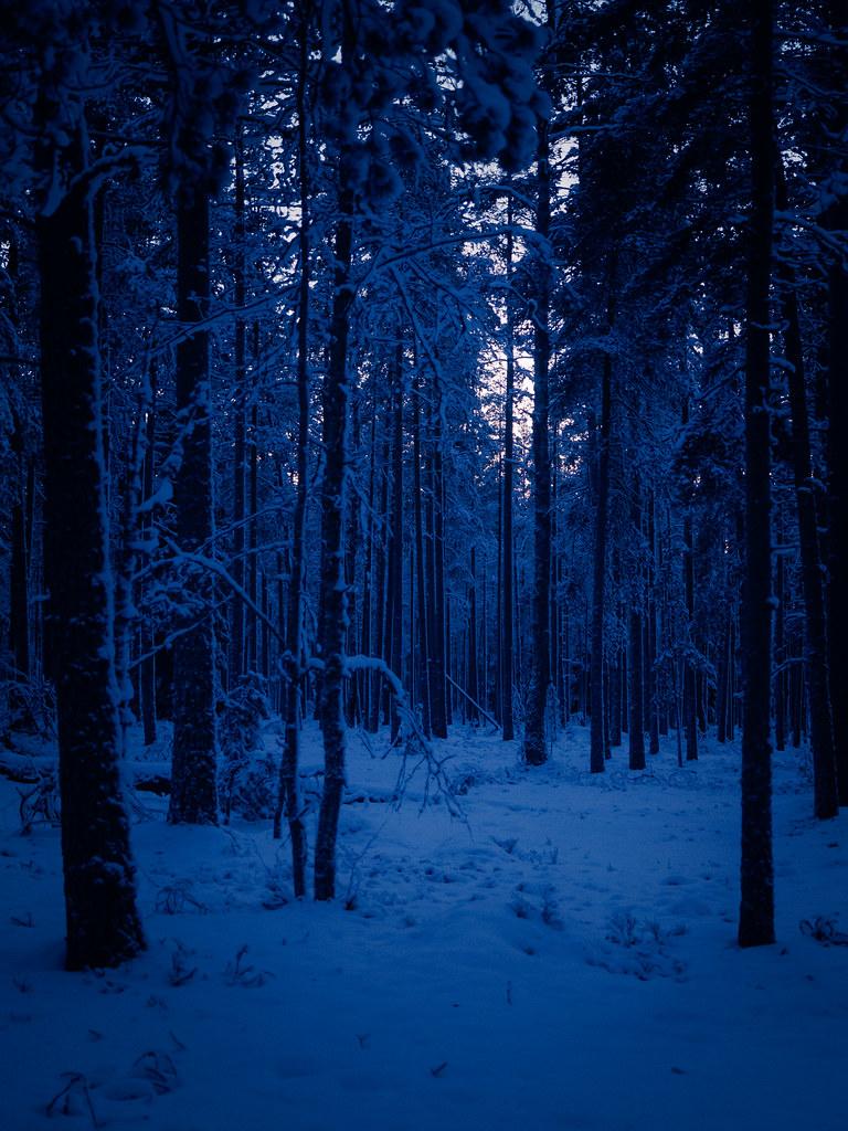 Dark 3d Wallpaper Deep Blue Woods Trm42 Flickr