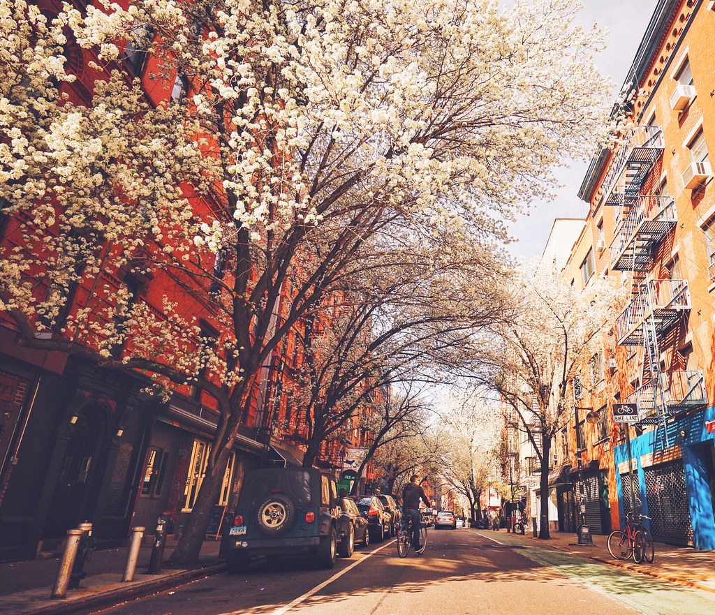 Pink Fall Wallpaper New York City Springtime Lower East Side Clinton Str