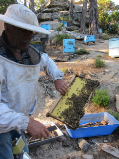 beekeeper-at-work-on-Ikaria