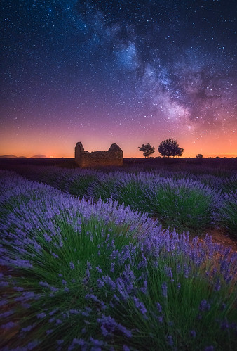 Gif Wallpaper Iphone A Lavender Night A Beautiful Clear Night At The Lavender