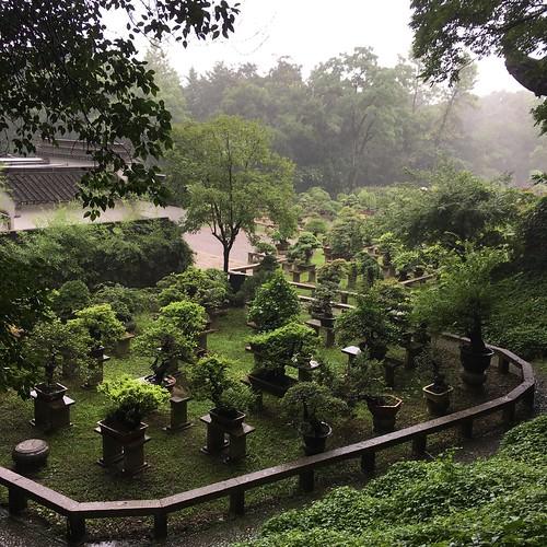 Potted Plant Landscape