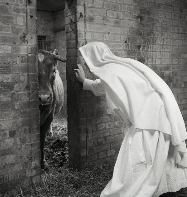 Sheepskin Nuns Working On A Farm : Bridget Bishop Photography