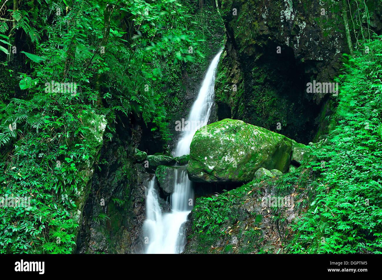 Akaka Falls Wallpaper Deep Forest Waterfall Stock Photo 61967925 Alamy