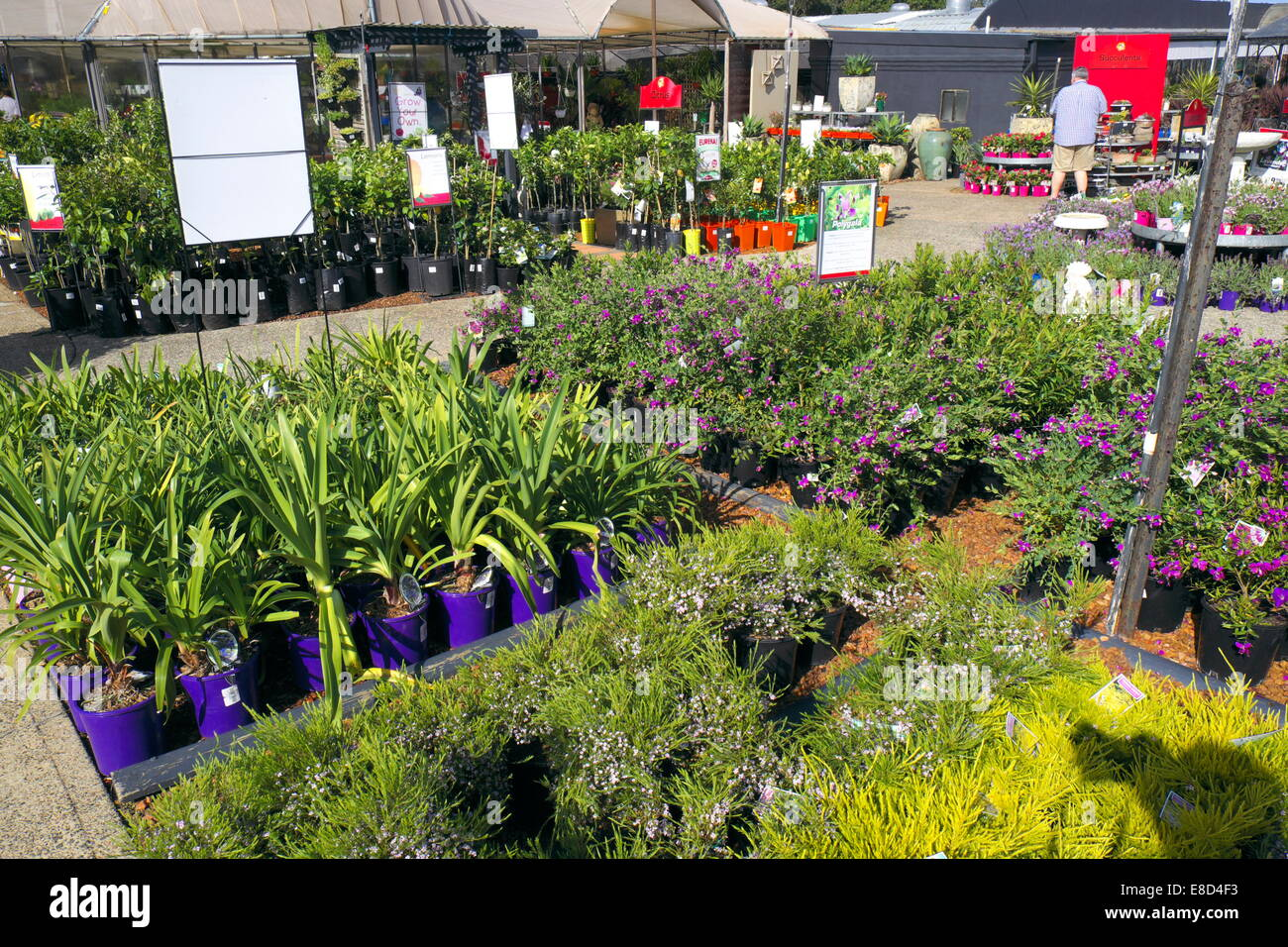Buy Plants Sydney Sydney Garden Centre With A Display Of Plants For Sale To