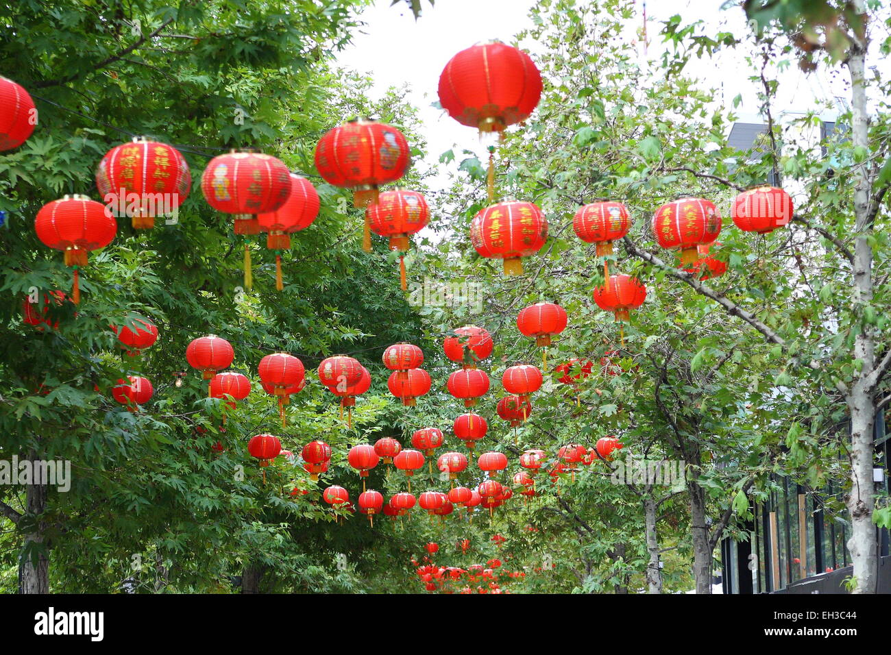 Paper Lanterns Melbourne Red Lanterns Hanging On Trees During Lunar Festival In Southbank