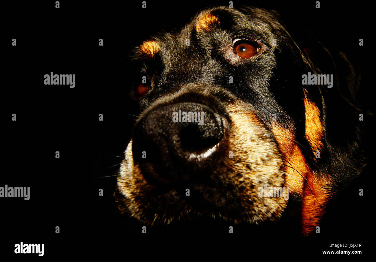 Ein Hund Kam In Die Küche Film Tv Hund Stock Photos And Tv Hund Stock Images Alamy