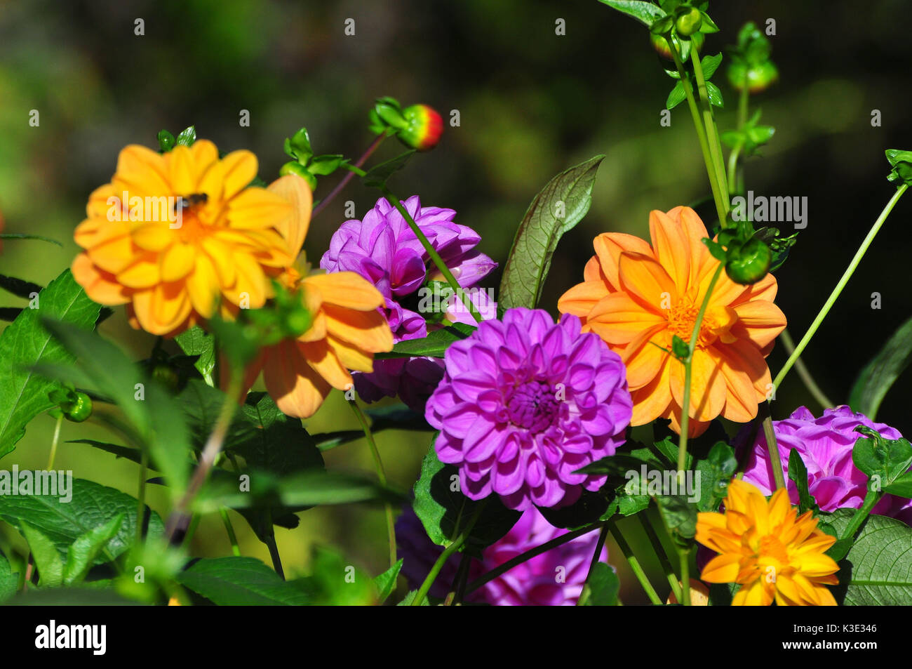 Blumenbeet Blumenbeet Stock Photos And Blumenbeet Stock Images Alamy