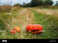 Pumpkins In Grass Stock Photos & Pumpkins In Grass Stock ...
