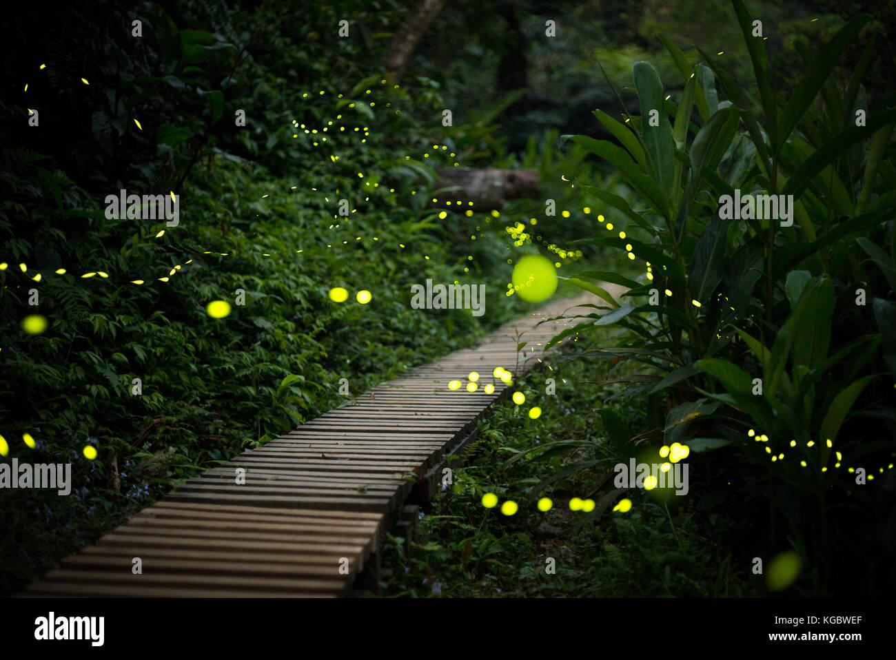 Firefly Insect At Night Fireflies At Night Stock Photos And Fireflies At Night Stock