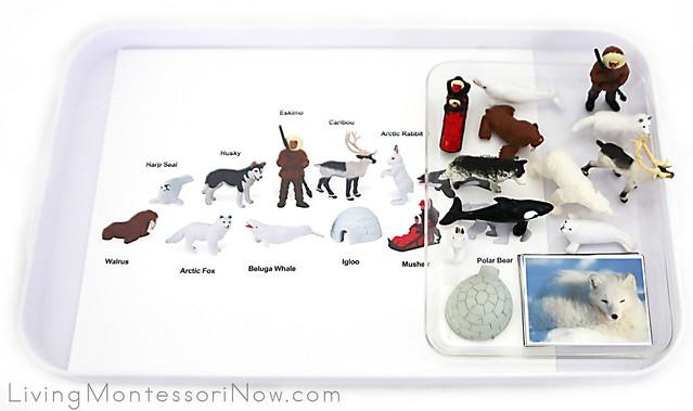 Free Arctic Animal Printables and Montessori-Inspired Arctic Animal