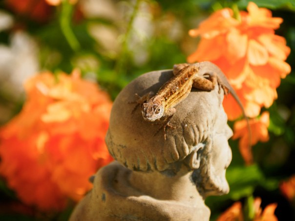 St. Francis and the lizard 2
