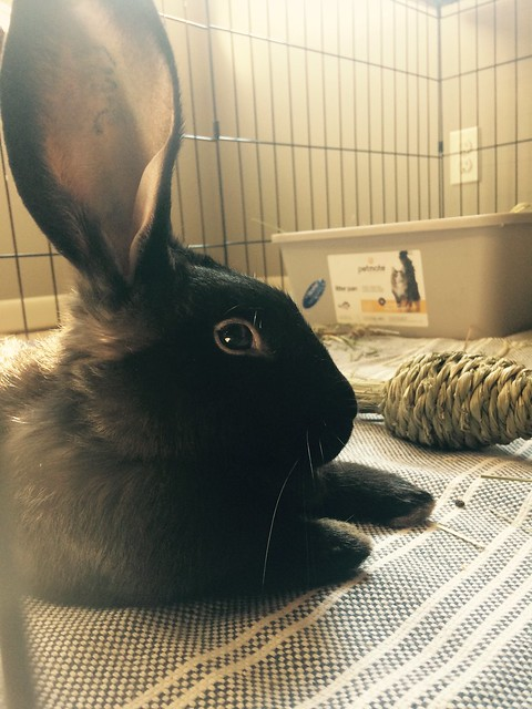 Afternoon bunny