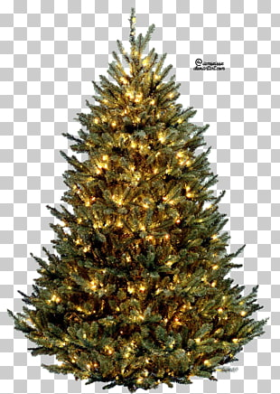 11 Vatican Christmas Tree PNG cliparts for free download UIHere