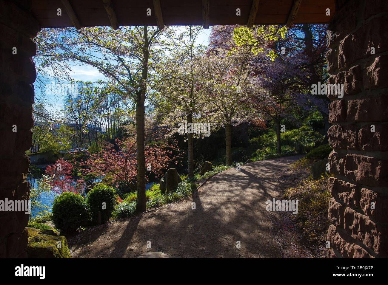 Page 2 Sakura Like High Resolution Stock Photography And Images Alamy