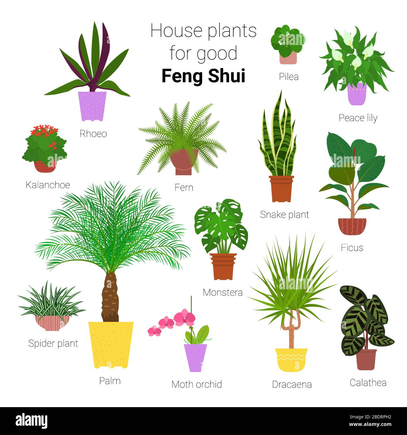 Colorful Set Of Various Potted Houseplants For Good Feng Shui Succulents Evergreen Plants In Planters Flat Style Stock Vector Illustration Stock Vector Image Art Alamy