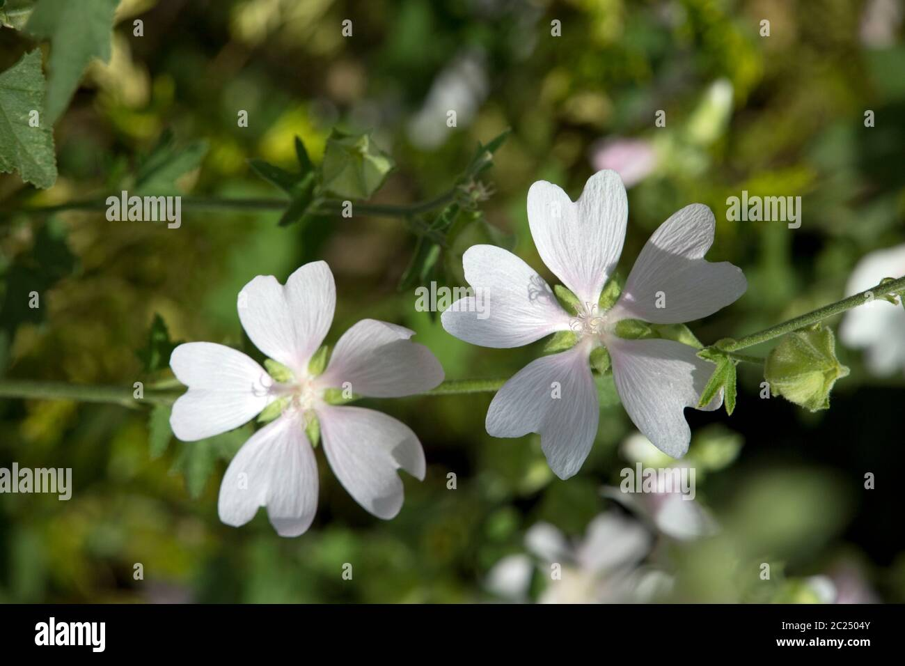 Blumenbeet Planer Blass High Resolution Stock Photography And Images - Alamy