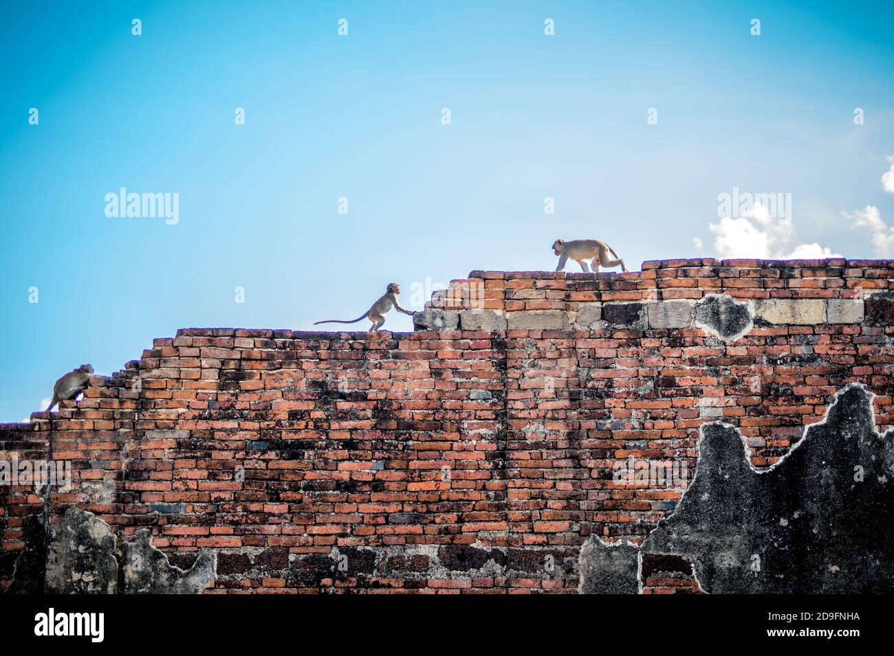 Monkeys On Houses High Resolution Stock Photography And Images Alamy