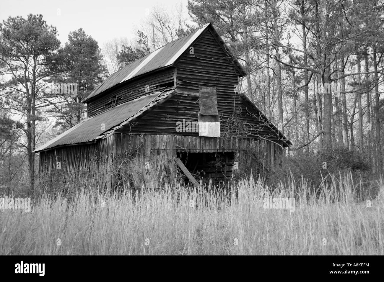 Old Barn With High Grass In Foreground And Trees In Background In Stock Photo Alamy