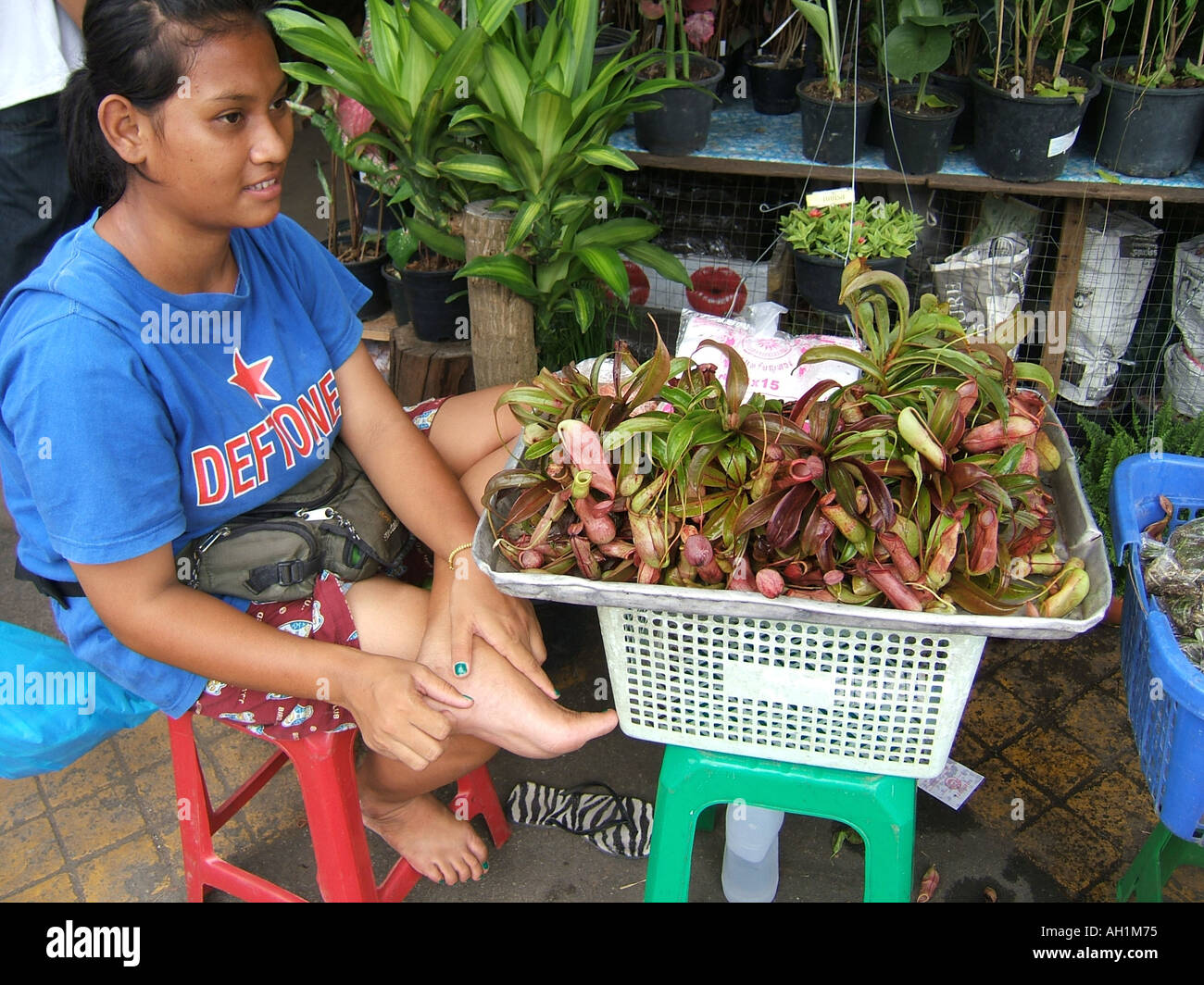Asian Plants For Sale Pitcher Plants For Sale In The Chatuchak Market Thailand Asia