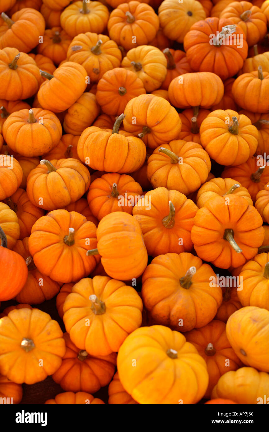 Vegetable Garden In Fall Wallpaper Mini Pumpkin Background Stock Photo 5125727 Alamy