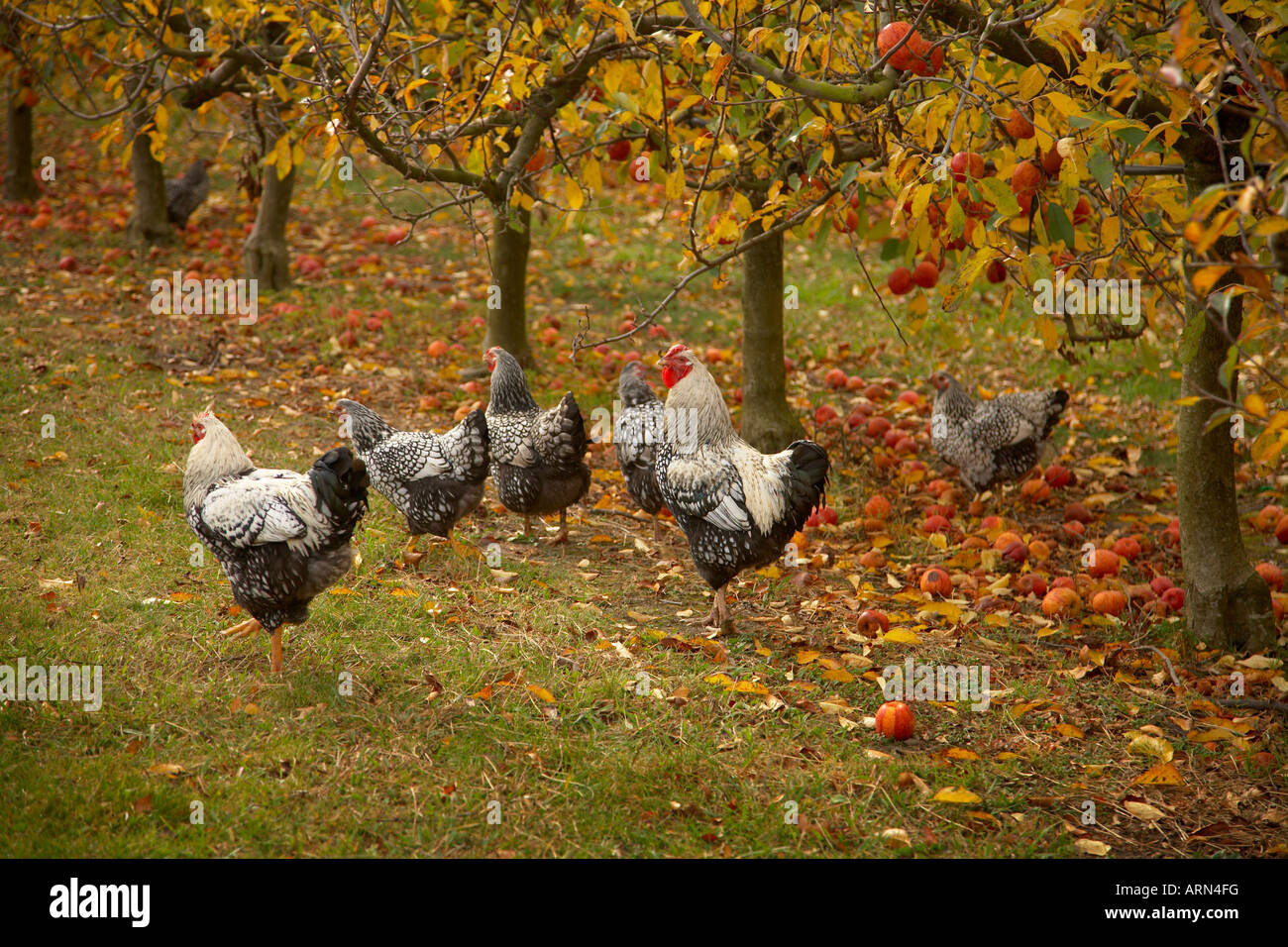 Red Rooster Coffee Garden Valley Biodynamic Stock Photos And Biodynamic Stock Images Alamy