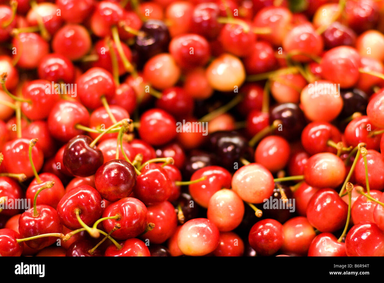 Light Shop Adelaide Light Red Cherries A Traditional Christmas Fruit In Australia For