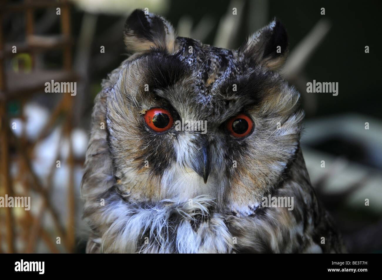 Stuff Owl Owl Taxidermy Stock Photos And Owl Taxidermy Stock Images