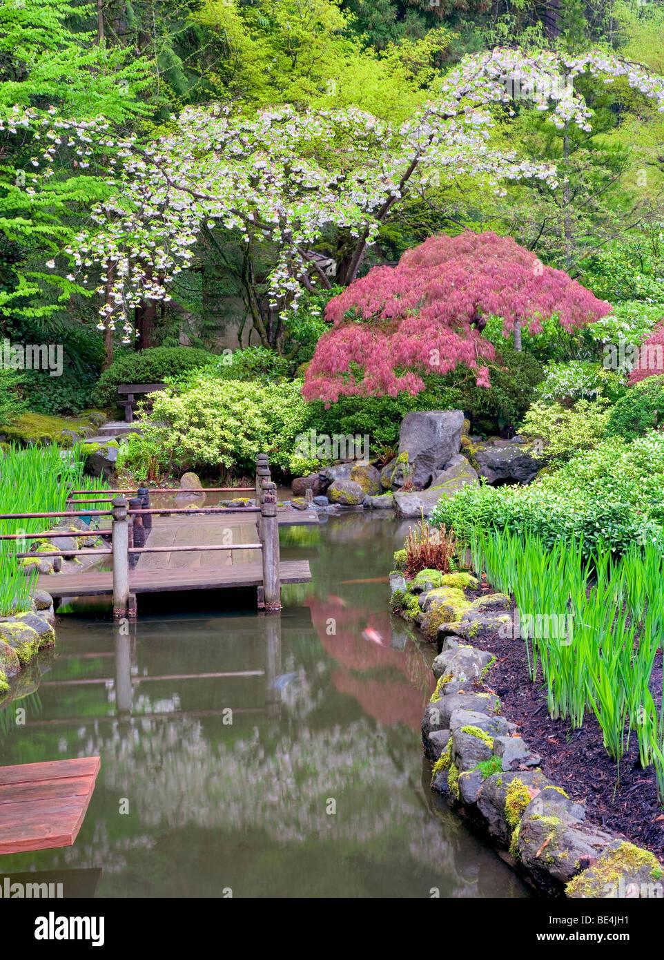 japanese garden cherry blossom bridge koi pond and cherry blossoms download