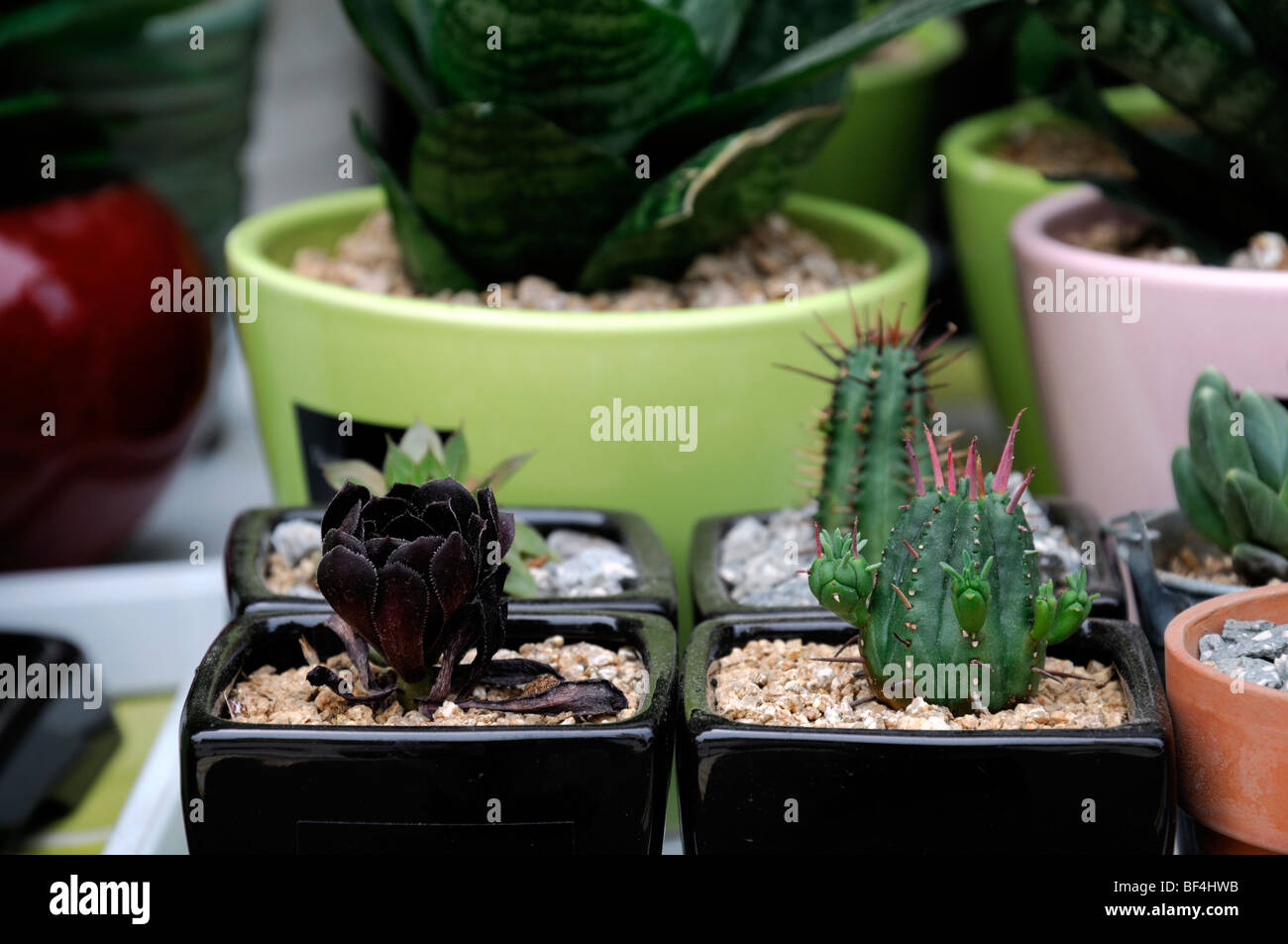 Cactus Pots For Sale Succulents Stock Photos And Succulents Stock Images Alamy