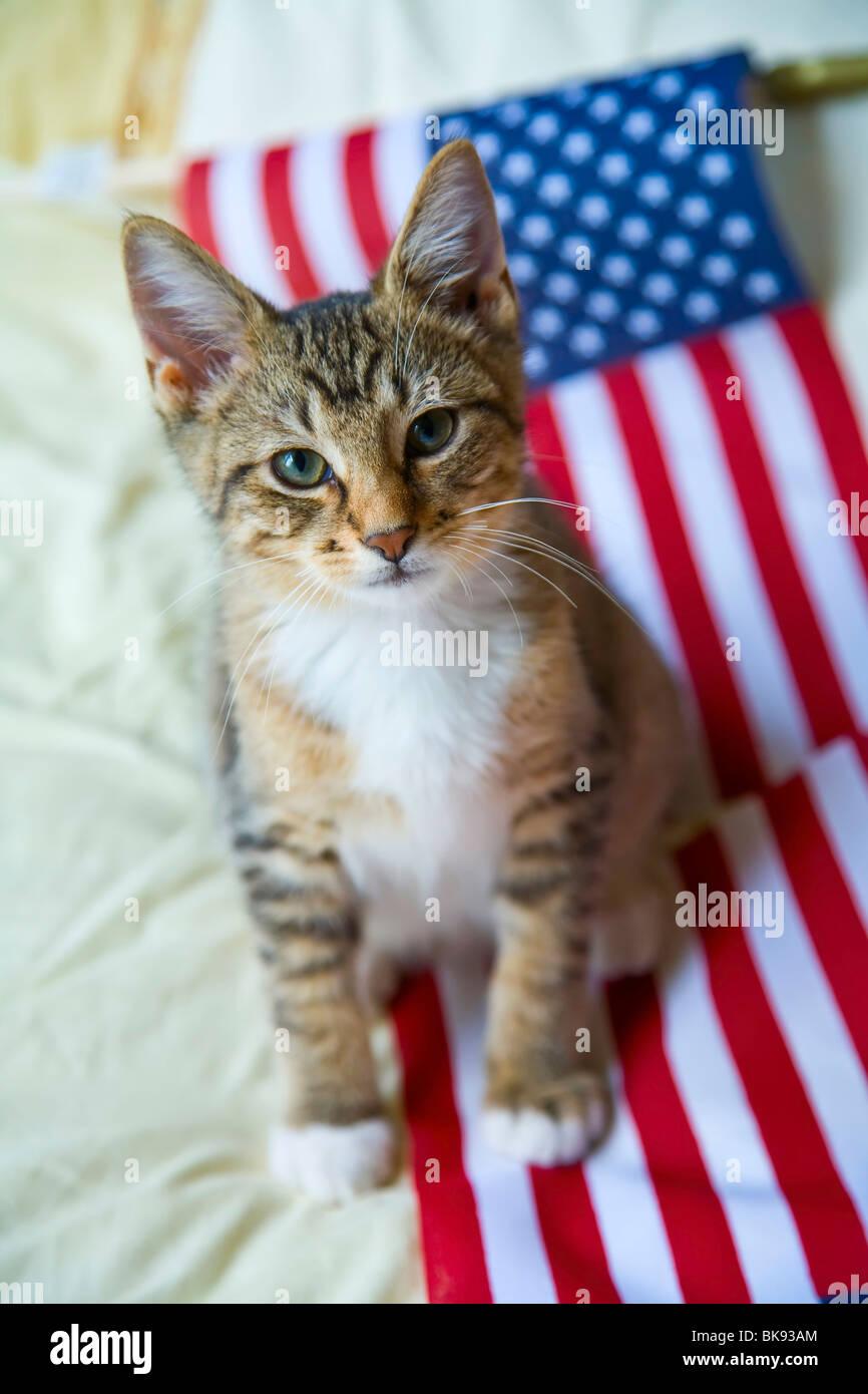 Cute Kitten Wallpaper For Mobile Kitten Resting On An American Flag Stock Photo 29089052