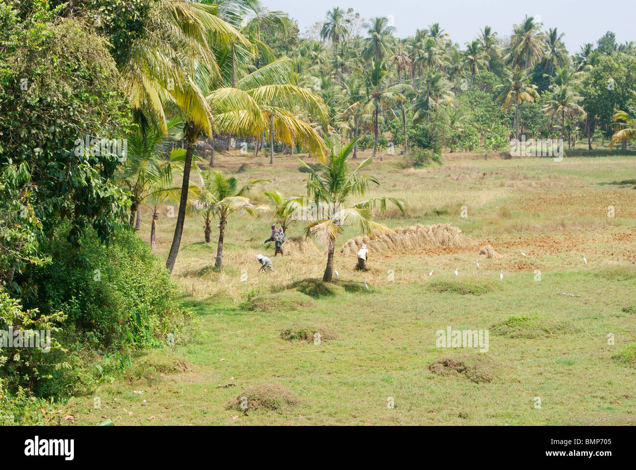 Beautiful Farmhouse In Kerala Kerala Agricultural Land A Beautiful Scenery Of Indian Kerala