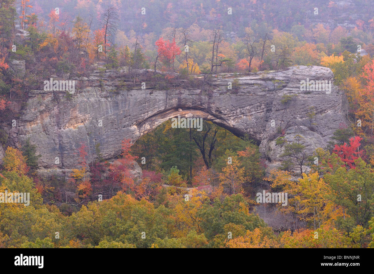 Autumn Fall Live Wallpaper Natural Arch Daniel Boone National Forest Whitley City