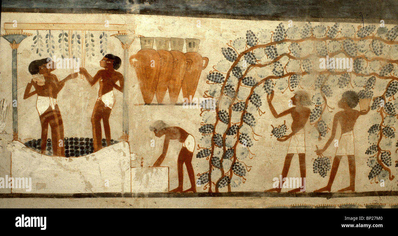 Pintura Egipcia Wine Production In Ancient Egypt Fresco From The Tomb Of
