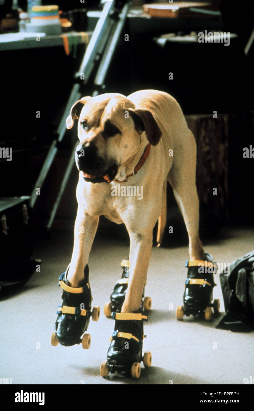 Dog on rollerskates the truth about cats and dogs 1996