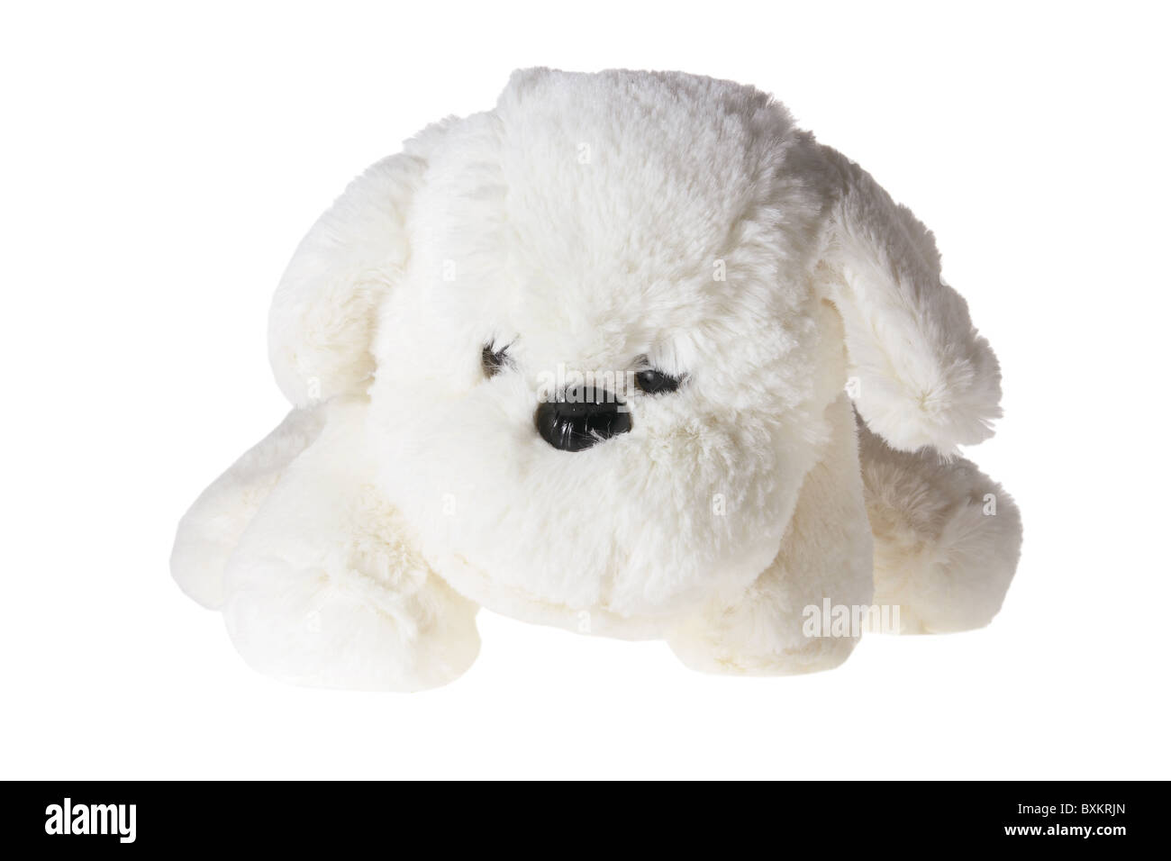 Soft Toy Dog Cuddly Toy Dog Stock Photos And Cuddly Toy Dog Stock Images