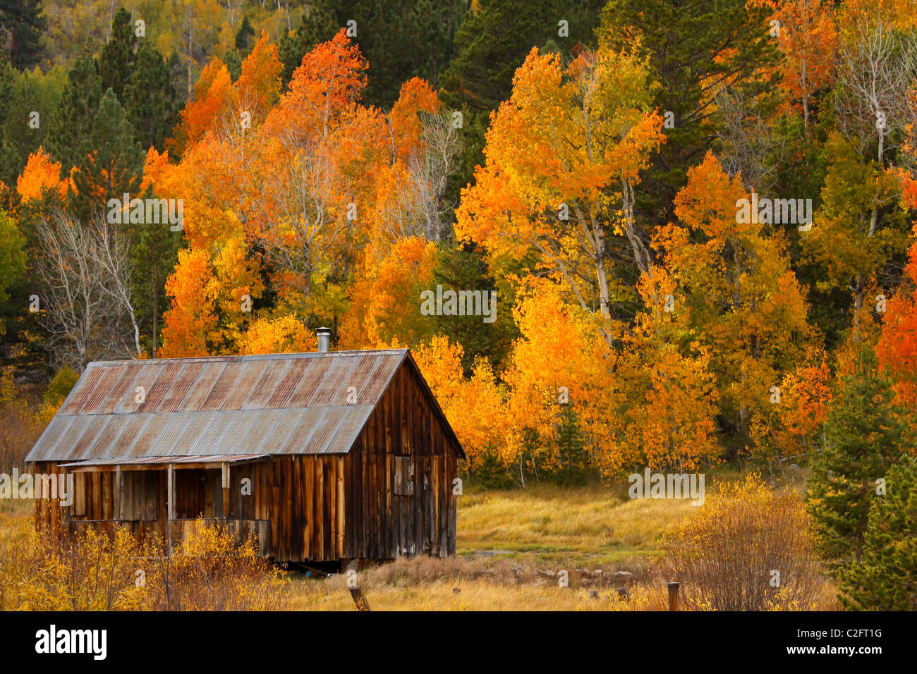 Colorful Fall Scene Wallpaper A Rustic Cabin In Autumn In Hope Valley In The Sierra