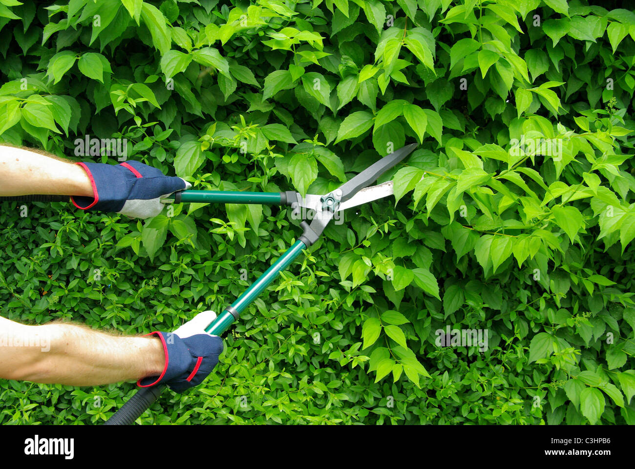 Hecke Schneiden Hecke Schneiden High Resolution Stock Photography And Images - Alamy
