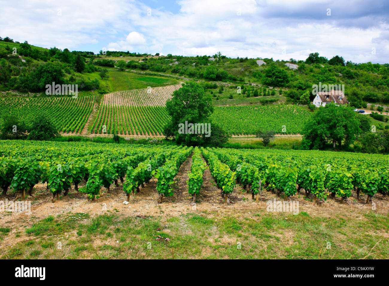 Grande Cave A Vin Vin De Bourgogne Stock Photos Vin De Bourgogne Stock Images Alamy